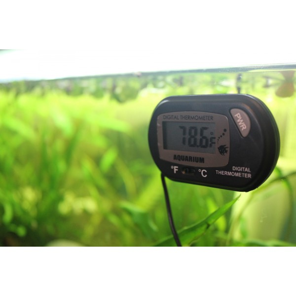 Digital thermometer for aquariums are on sale for Aquarium thermometer